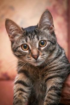 Чудесный молодой кот Пират в добрые руки!