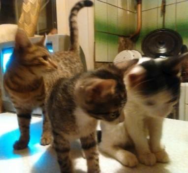 Замечательные котята в добрые руки!
